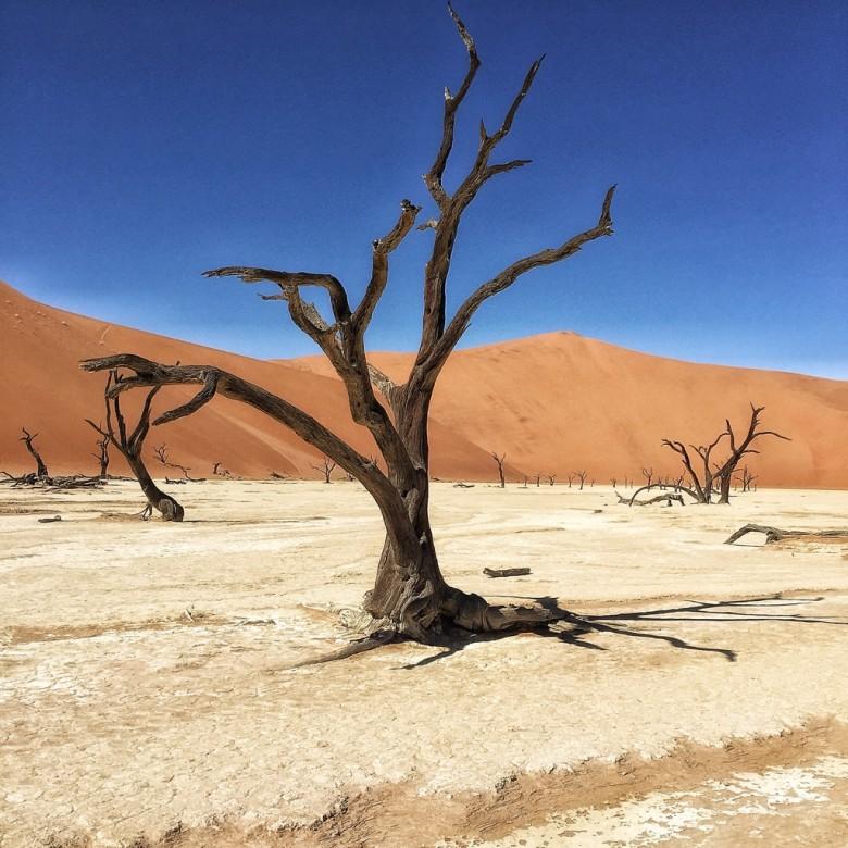 Toter Baum vor roter sanddüne